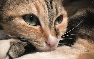 στειρώσεων για αδέσποτες γάτες