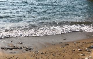 Εθελοντικός καθαρισμός στις παραλίες της Αμοργού