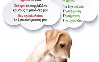 Οι υποχρεώσεις των ιδιοκτητών ζώων συντροφιάς